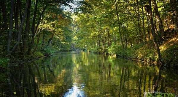 rzeka-lyna