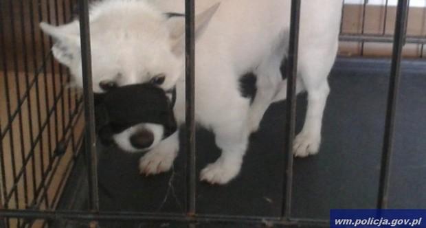 pies-wyrzucony-przez-balkon