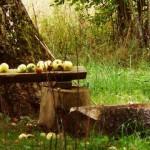 Święto jabłka. Od Cezanne'a do nieużytków sztuki