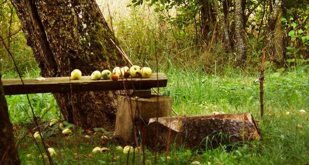 swieto-jablka-bwa