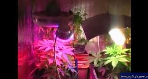 Policjanci CBŚ zlikwidowali dwie plantacje konopi indyjskich. Zabezpieczono ponad 600 g marihuany