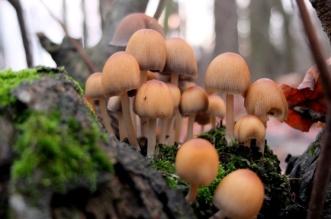 grzyby-las