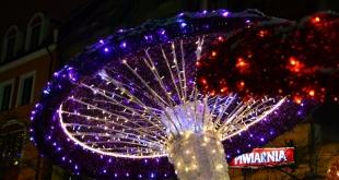 7-warminski-jarmark-swiateczny-13-12-2015 (25)