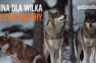 godzina-dla-wilka