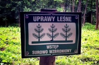 uprawy-lesne