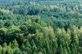 lasy-olsztynskie