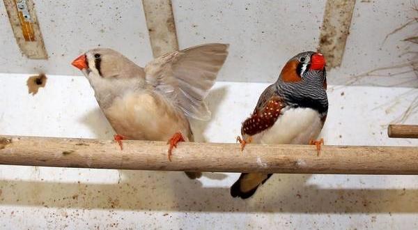 hodowla-ptakow-sprecowo