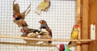 hodowla-ptakow-sprecowo1