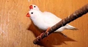 hodowla-ptakow-sprecowo2