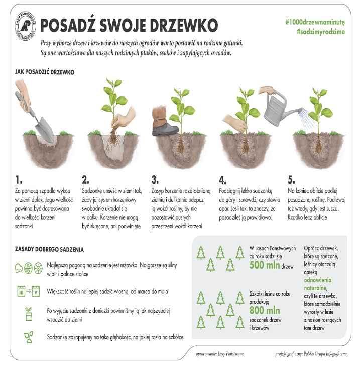 posadz-drzewko
