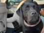 Próbowali wyłudzić pieniądze za znalezionego psa. Zostali zatrzymani