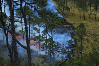 fire-4951711_128001.jpg